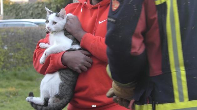 Poes gered door brandweer in Kloosterveen